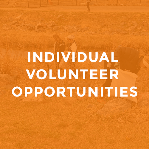 Individual_volunteer_opportunities